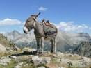 Unser Esel namens Oslo posiert für uns, Blick nach Italien