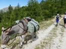 Abstieg ins Vallon du Molliéres, ein entspannter Tag