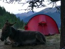 Titue genießt unsere Nähe am Lagerfeuer