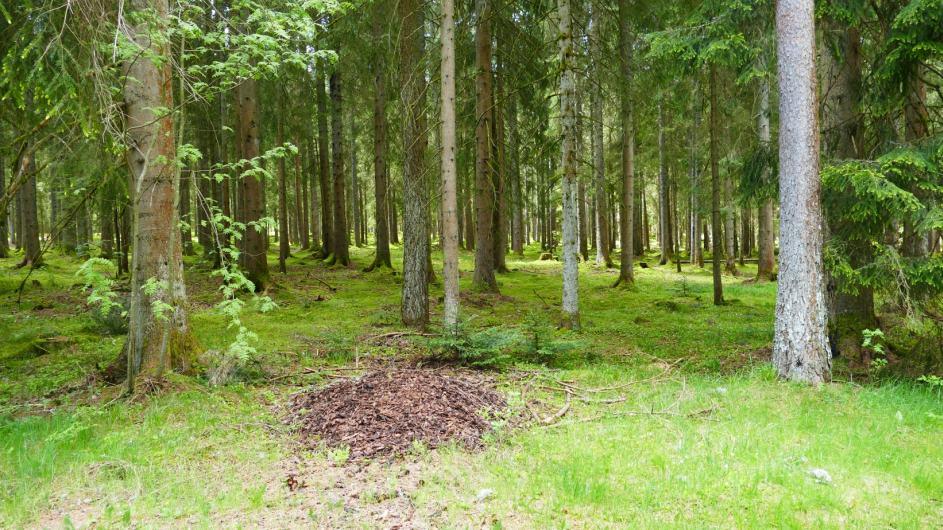 Schwarzwald-Homepage-064