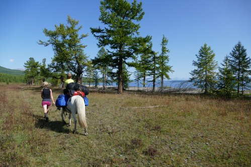 Mongolei Packpferd Trekking
